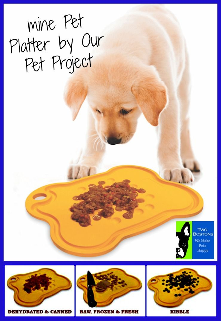 Large Mine Pet Platter Animal Projects Pets Dog Projects