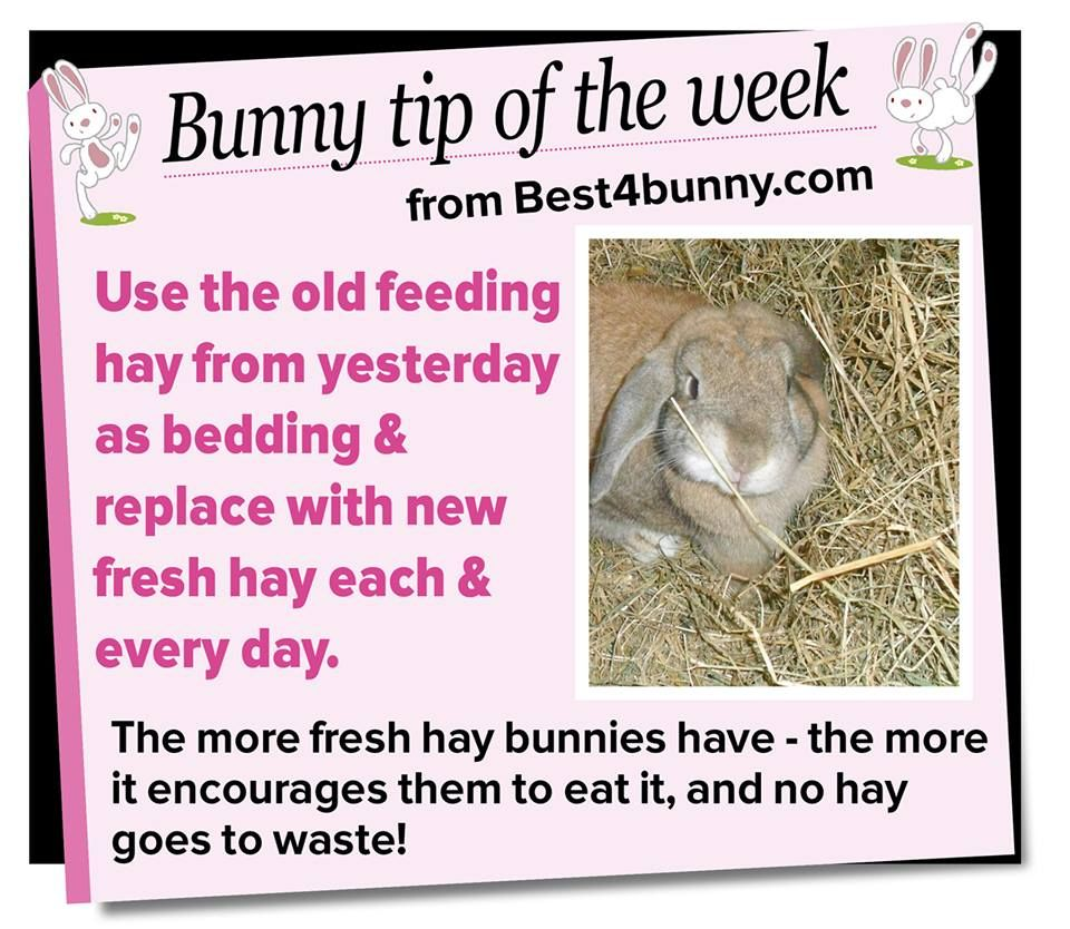 Bunny tip swap the old feeding hay to bedding www