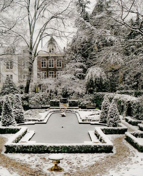 Snowy Topiary #wintergardening