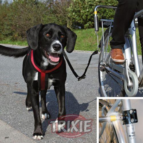 Deportes al aire libre con mascotas #mascotas #maskokotas #deportes #perros #dogs #trixie