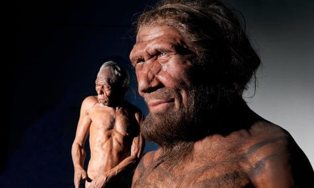 Scientists to grow 'mini-brains' using Neanderthal DNA #DNA #grow #minibrains #Neanderthal #Scientists