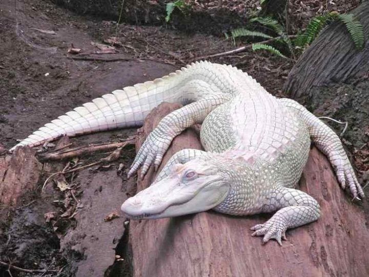 Photo of 11 Incredibly Rare Albino Animals You've Probably Never Seen Before