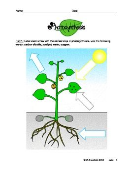 Photosynthesis Worksheets Elementary #1 | Fun School Activities ...