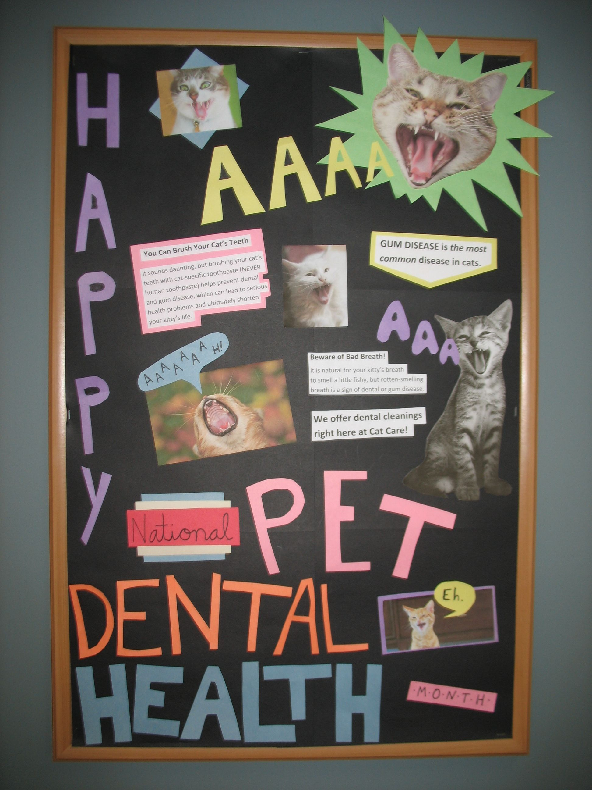 Our new bulletin board for February, National Pet Dental
