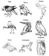 #Beaks #Bird #Feet The feet and beaks of birds can tell