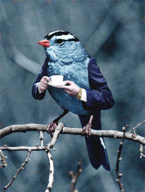 bird with arms drinking tea
