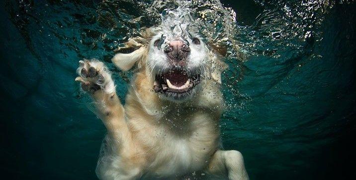 Tótó o cão marinheiro