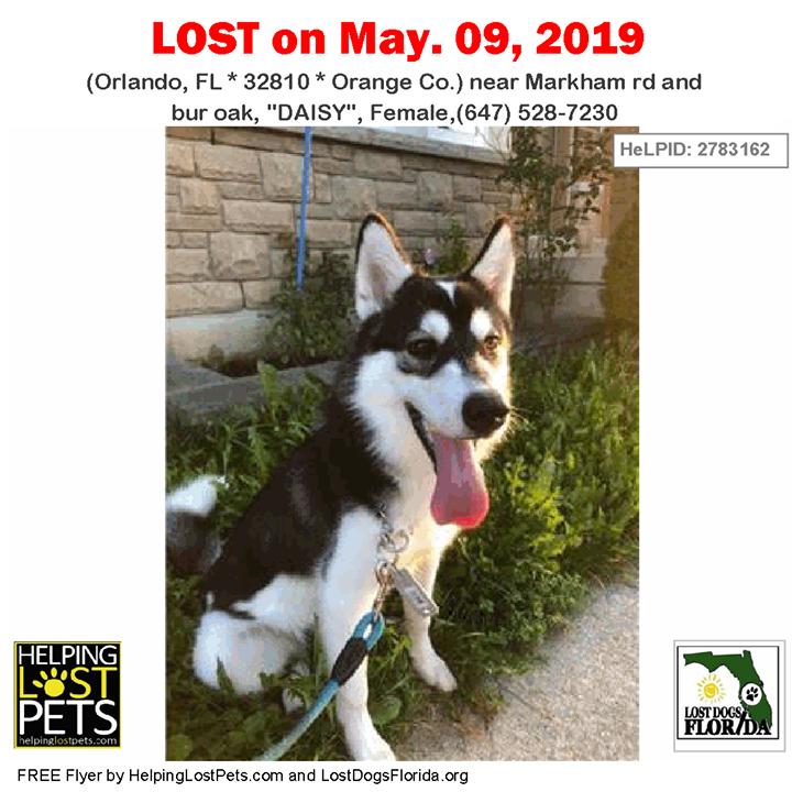 Lost Dog Have You Seen Daisy Lostdog Daisy Orlando Markham