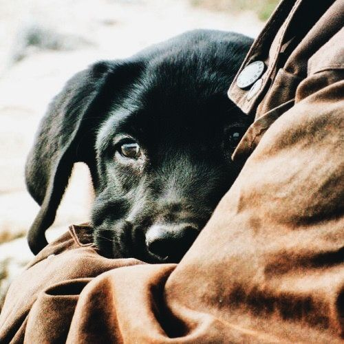 Pin On Animal Love