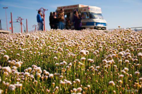 <b>2ª CATEGORÍA VERANO A CORUÑA: </b>Al rico helado de piña...-Camioneta de los helados frente a la Domus-Autor:M. TERESAMARTINEZ RIVAS