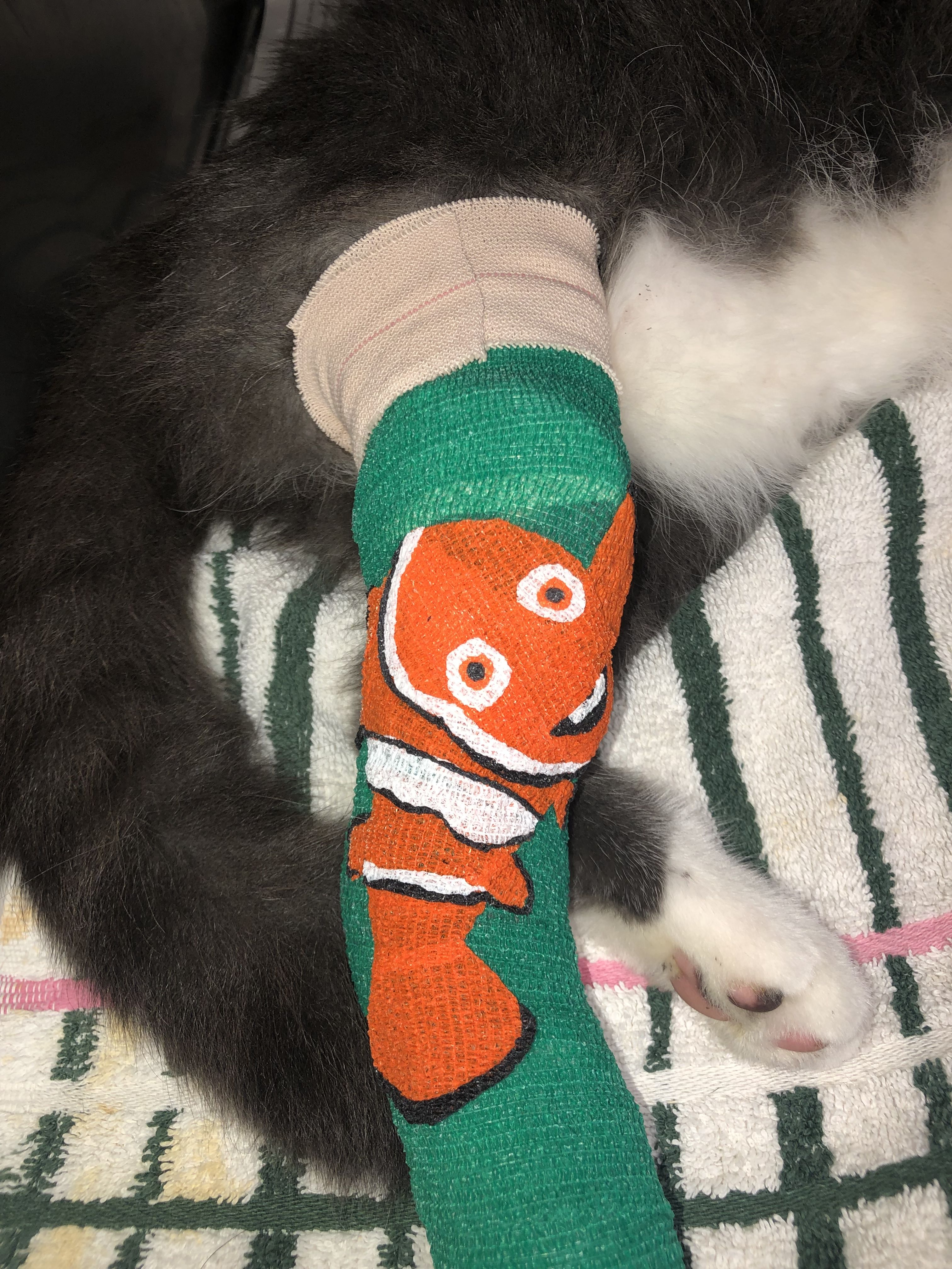 Pin by Gabbie Rivera on Vet Med Bandage Art Pet clinic