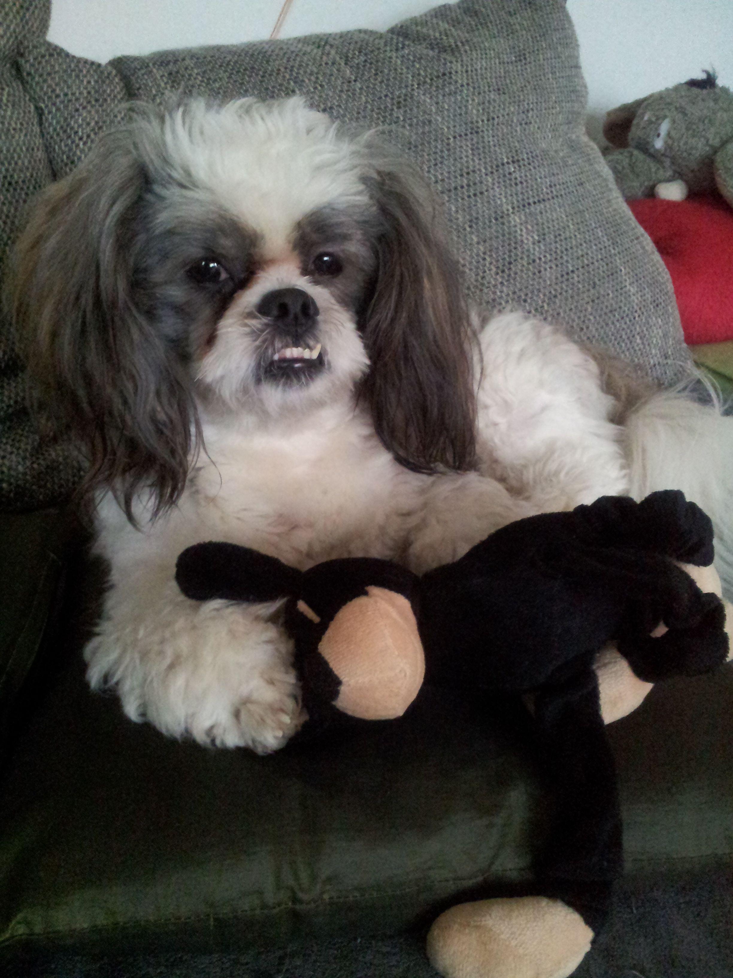 Hunde Foto: Petra und Theodor Mike - Theodor und Hugo ein unschlagbares Doppel Hier Dein Bild hochladen: http://ichliebehunde.com/hund-des-tages  #hund #hunde #hundebild #hundebilder #dog #dogs #dogfun  #dogpic #dogpictures