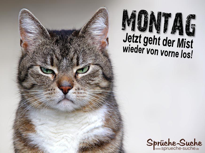 Montag Katze | Gedanken | Pinterest | Sprüche, Katzen und Witzig