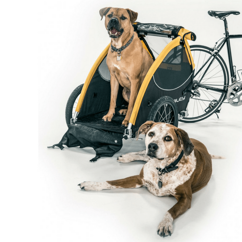 Tail Wagon Dog Bike Trailer by Burley | Dog Prams