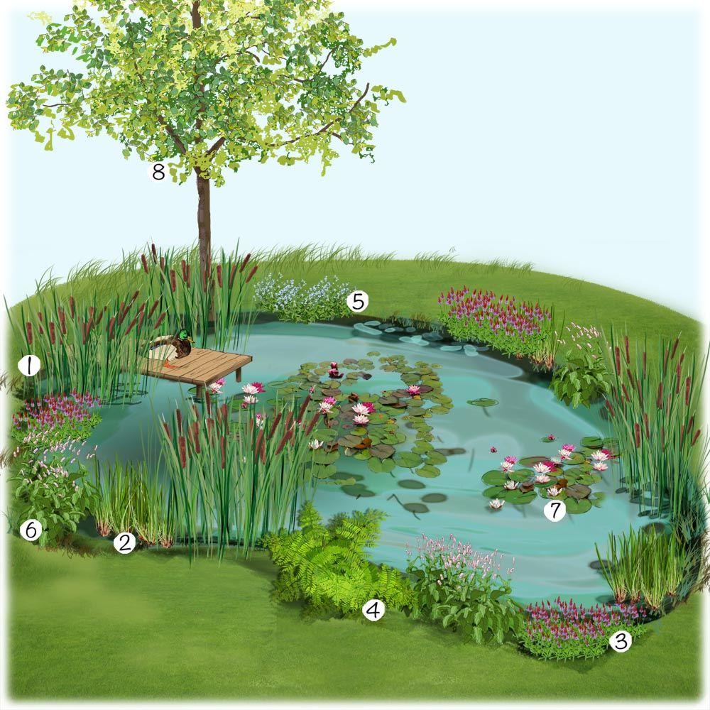 Projet am nagement jardin bassin naturel au jardin - Plantes pour bassin naturel villeurbanne ...