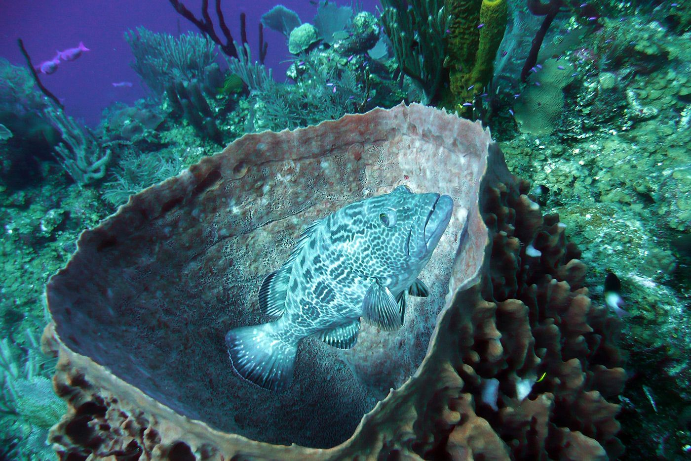 Sustainable Seafood Delicacies Emerge in Belize: Close relationships with conservation organizations help Belize to stay environmentally responsible in its seafood industry.