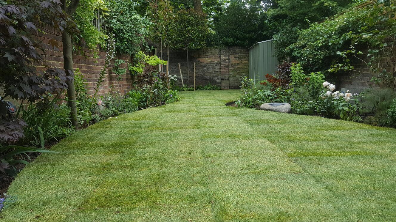 Rolawn Medallion Turf >> Landscaping Rolawn Medallion Turf Laid In This Garden New