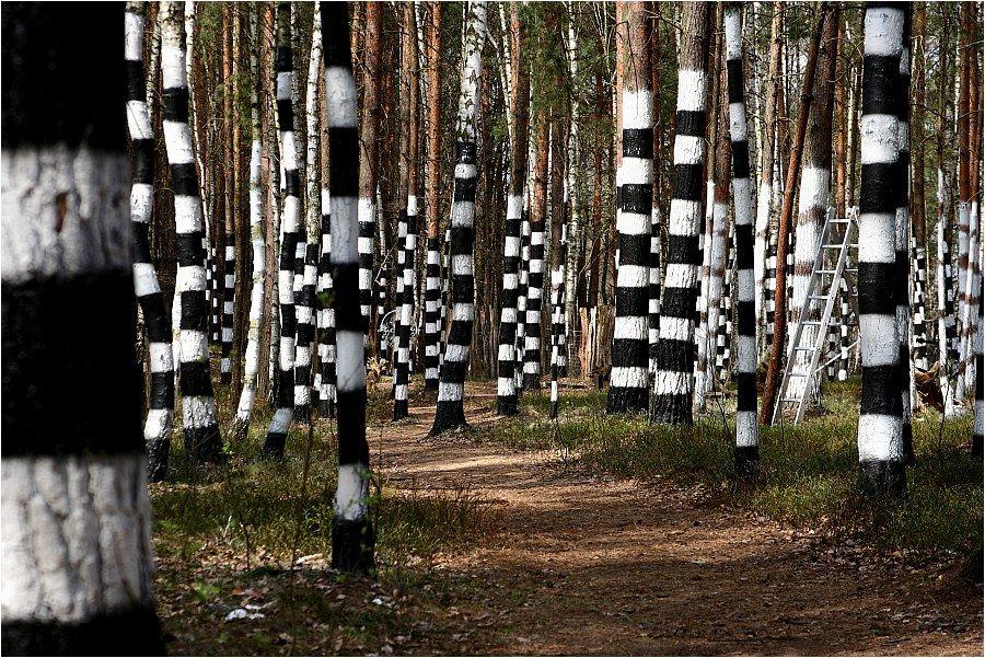 Zebrawald Kulturinsel Bilder Zebra Fotografie