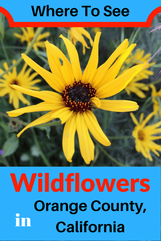 Plan A Hike This Spring To See The California Wildflowers In Bloom Check Out List Of Best Places Orange County From
