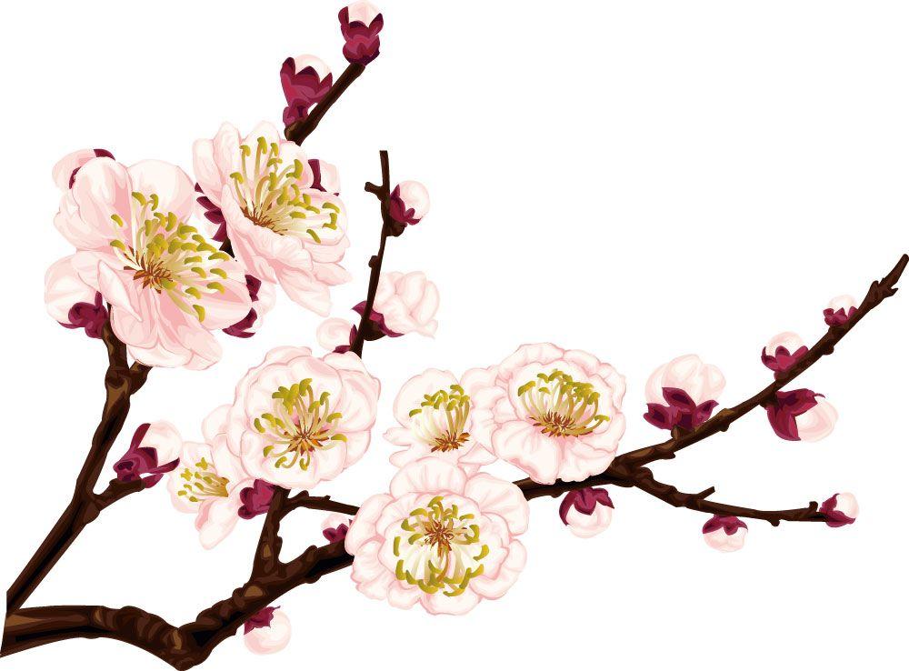 梅 うめ 梅 のイラスト 画像no 004 梅の花 枝と蕾 無料の 花 イラスト 梅の花 イラスト 梅 イラスト