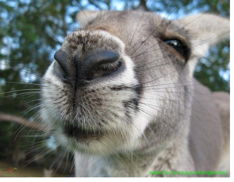 Anatomy   Animals - Anatomy refs and pics   Pinterest