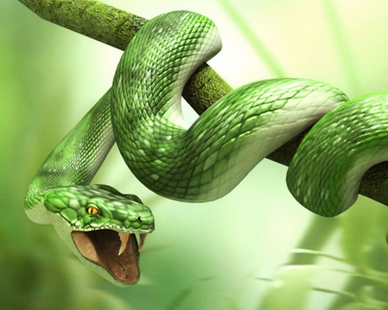 3d Animals Wallpapers Hd Snake Wallpaper Snake Animal Wallpaper