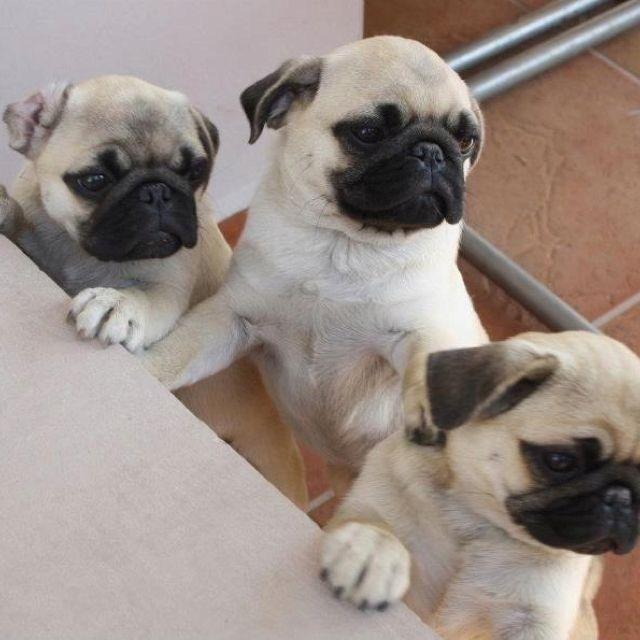 Lola, Coco & Lya