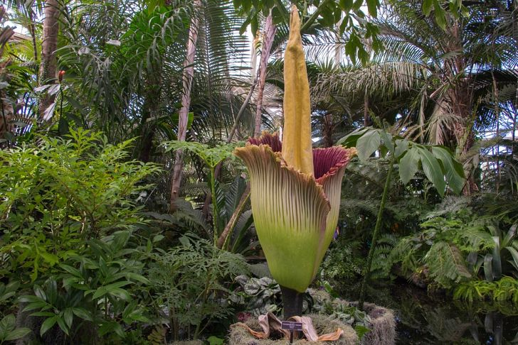 What Is The Rarest Flower In The World In 2020 Corpse Flower Rainforest Plants Corpse Flower Bloom