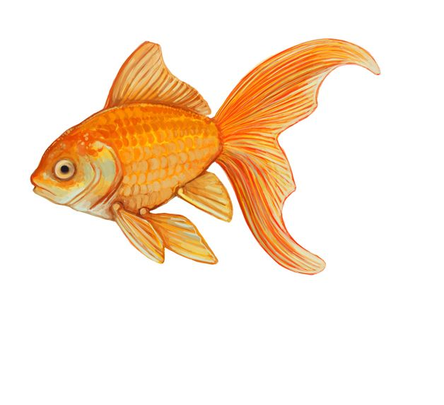 goldfish shape