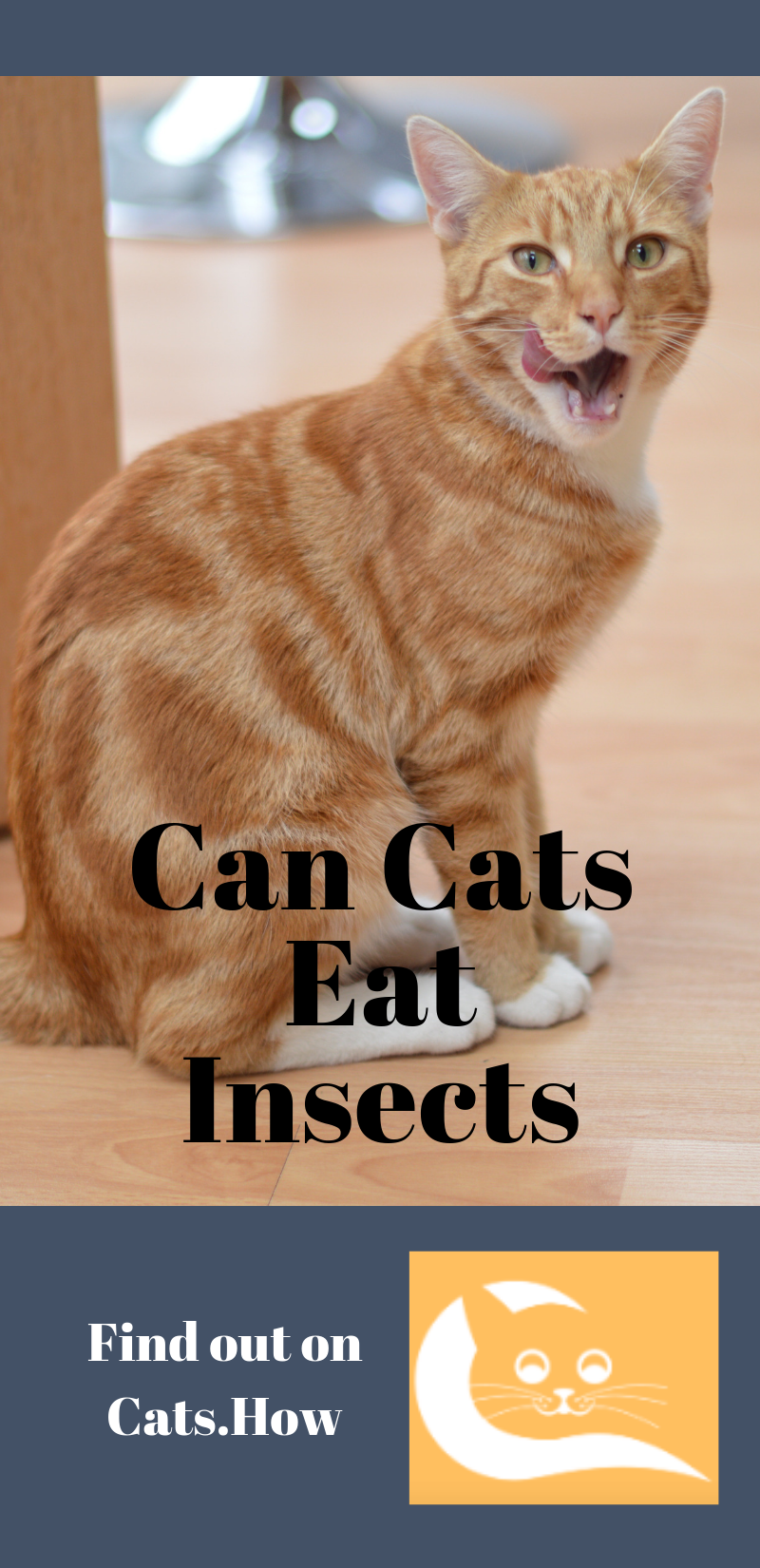 Can Cats Eat Insects Cats, Cat facts, Cat behavior