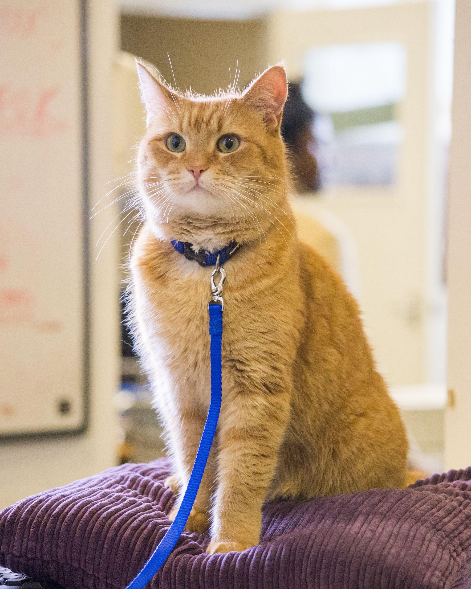 FILMTIP A STREET CAT NAMED BOB Kattennamen, Katten en