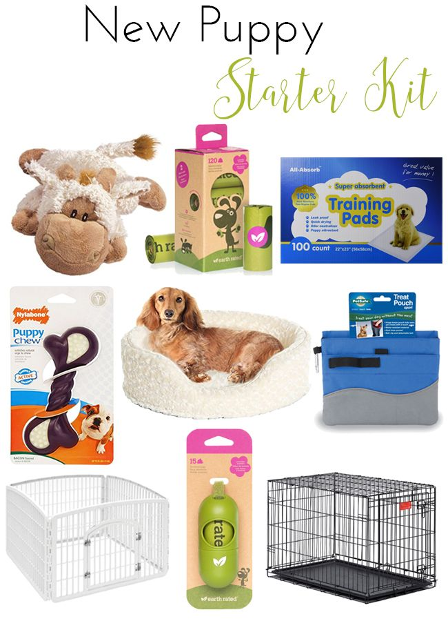 stuff for new puppy