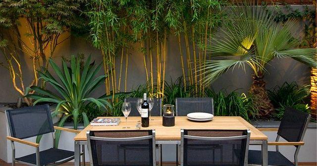 1plantas que purifican el aire de tu casa segun la Nasa