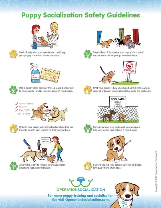 Puppy socialization guidelines Puppy socialization, Dog
