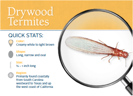Learn About How To Prevent Drywood Termites Termite Damage Wood Termites Termites
