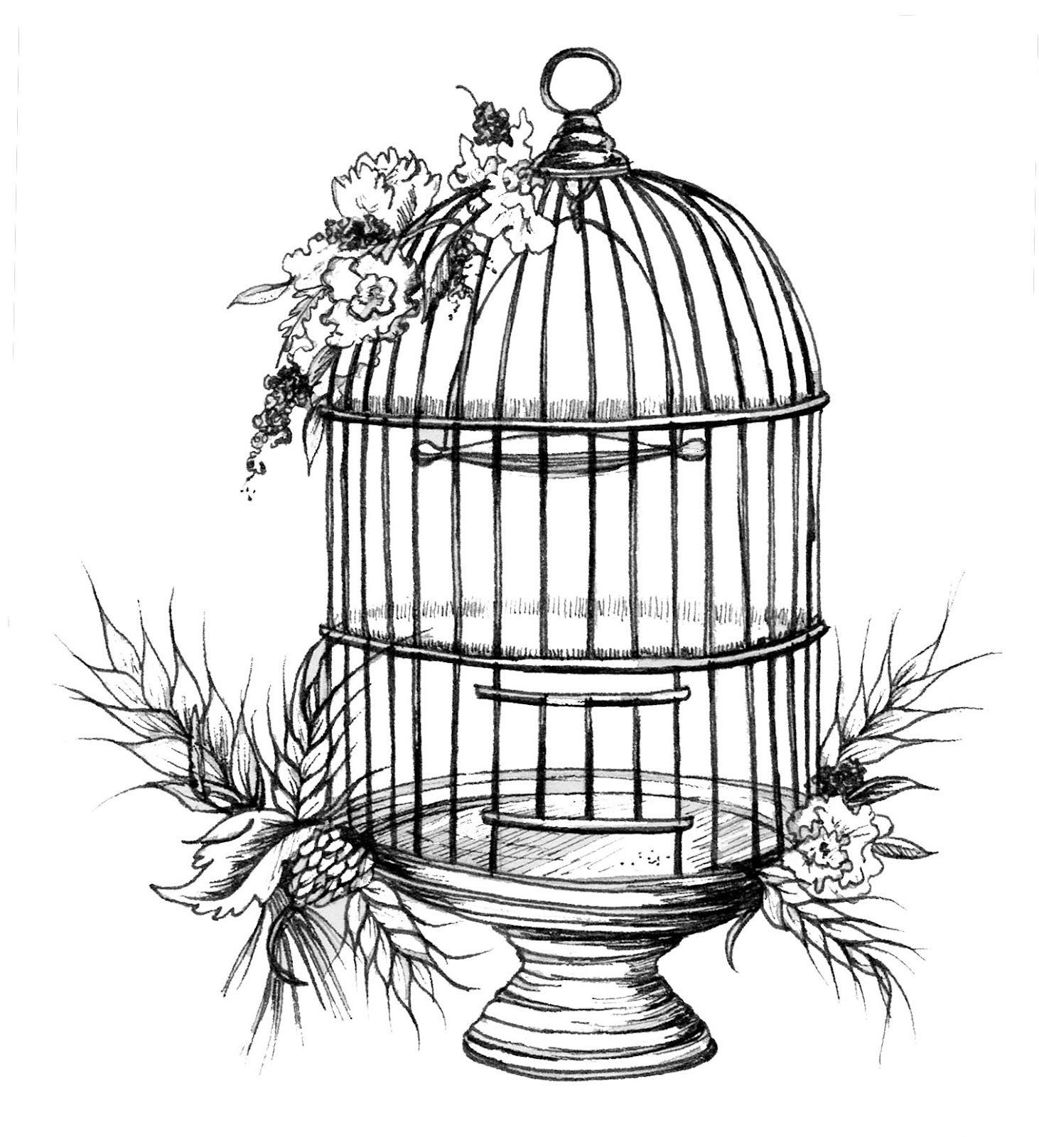 Bird Cage Sketch