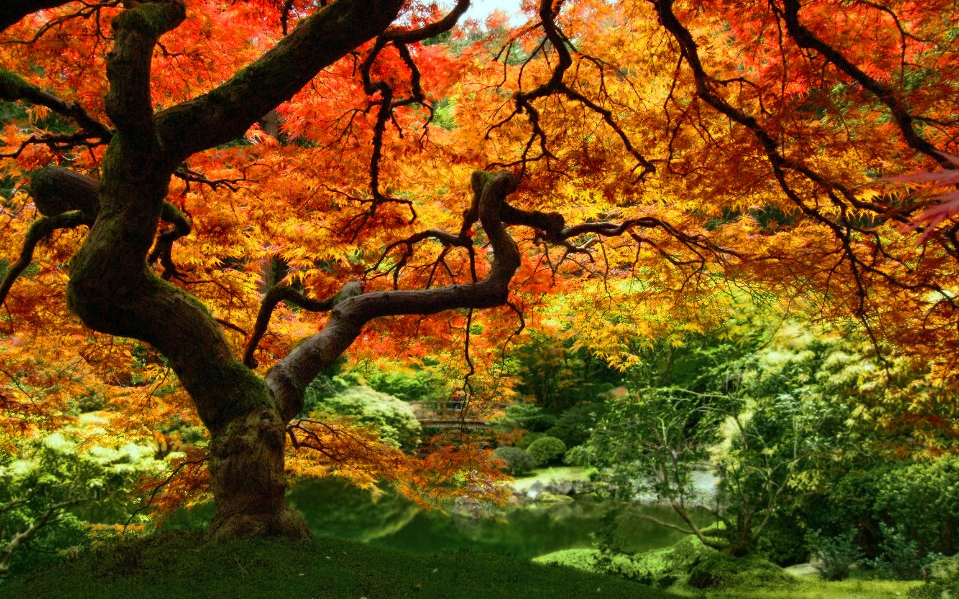 Autumn Leaves HD Wallpapers THIS Wallpaper