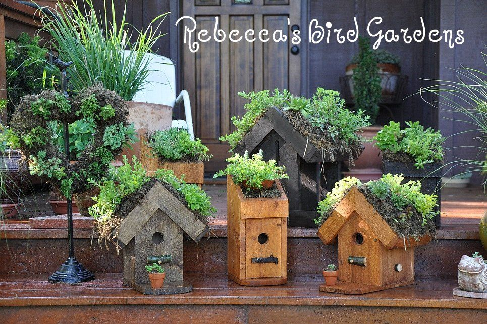 Two Of My Favorite Things Birdhouses And Sedum Plants