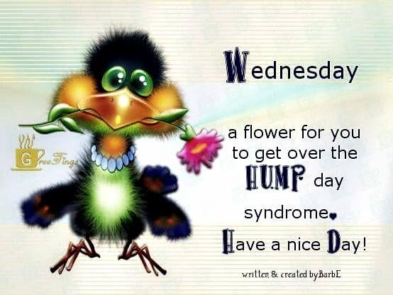 Image result for good morning wednesday funny