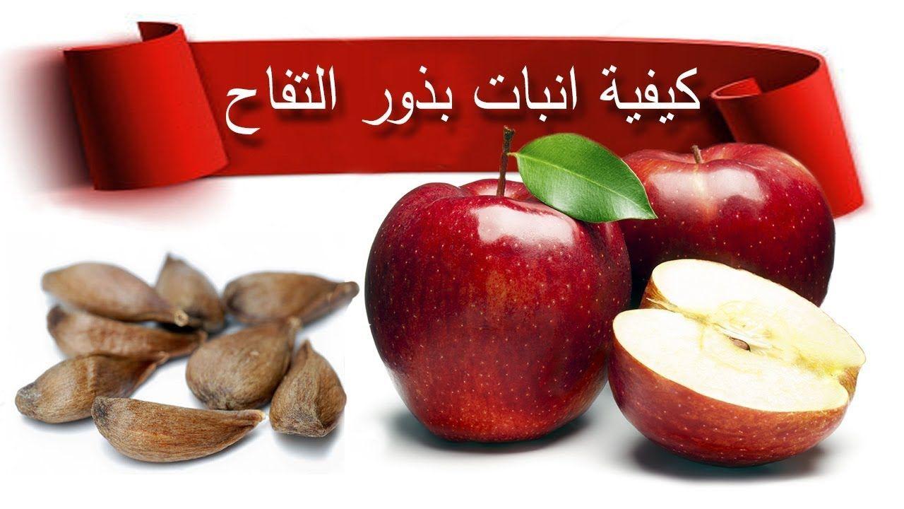 كيفية انبات بذور التفاح بسهولة Apple Fruit Food