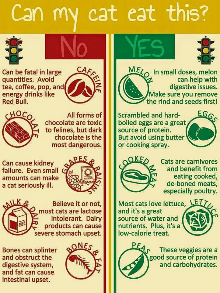 Can My Cat Eat This Cat Cats Pet Pets Catlovers Cattips