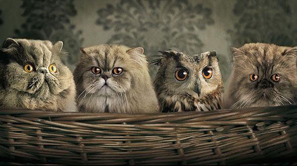 31+ Cat owl information