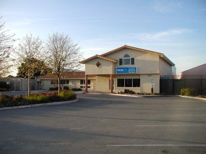 to VCA All Pets Animal Hospital Salinas, CA