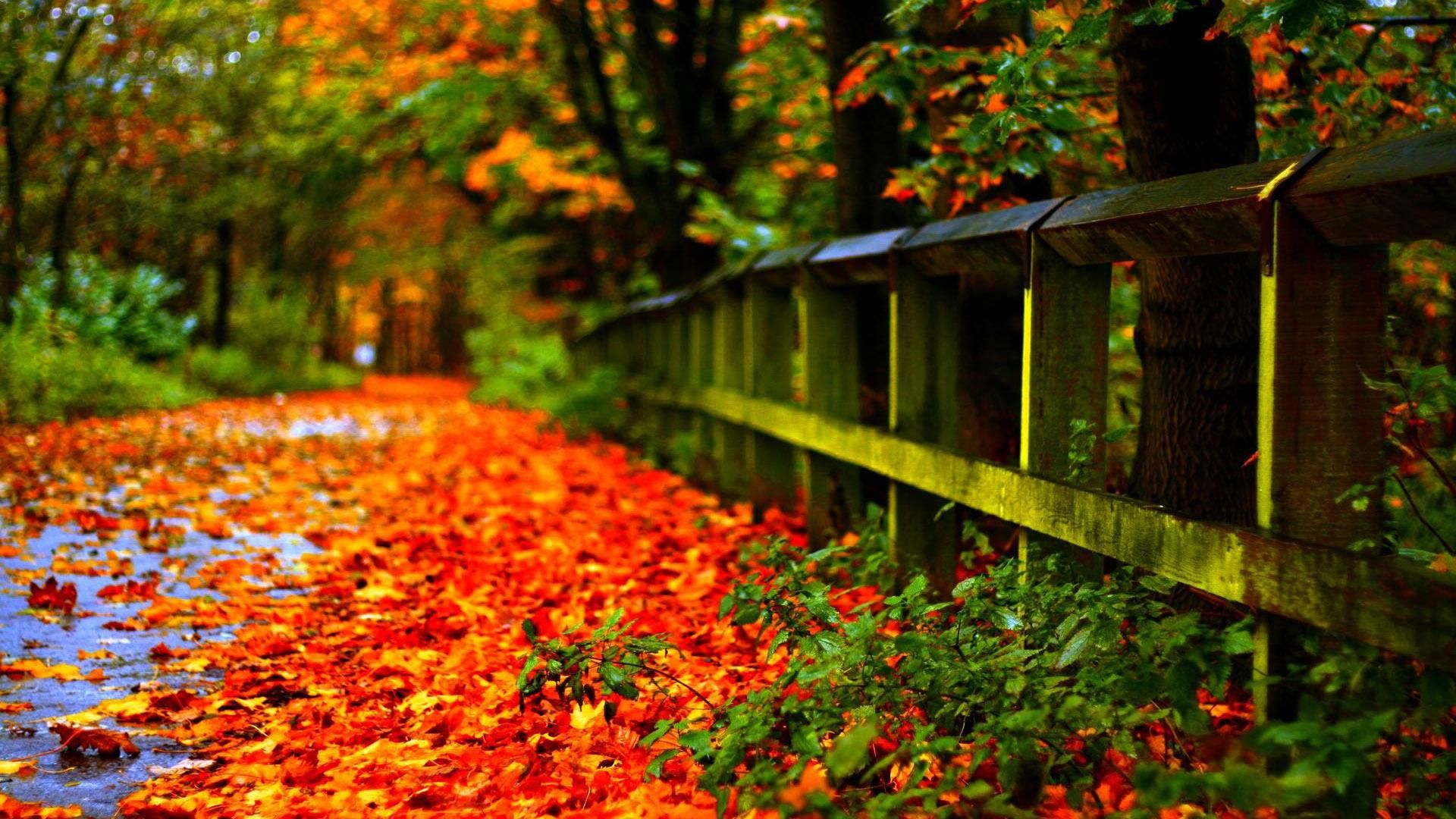 Carpet Of Autumn Leaves In The Park 1920x1080 Autumn Leaves Wallpaper Autumn Photography Fall Wallpaper