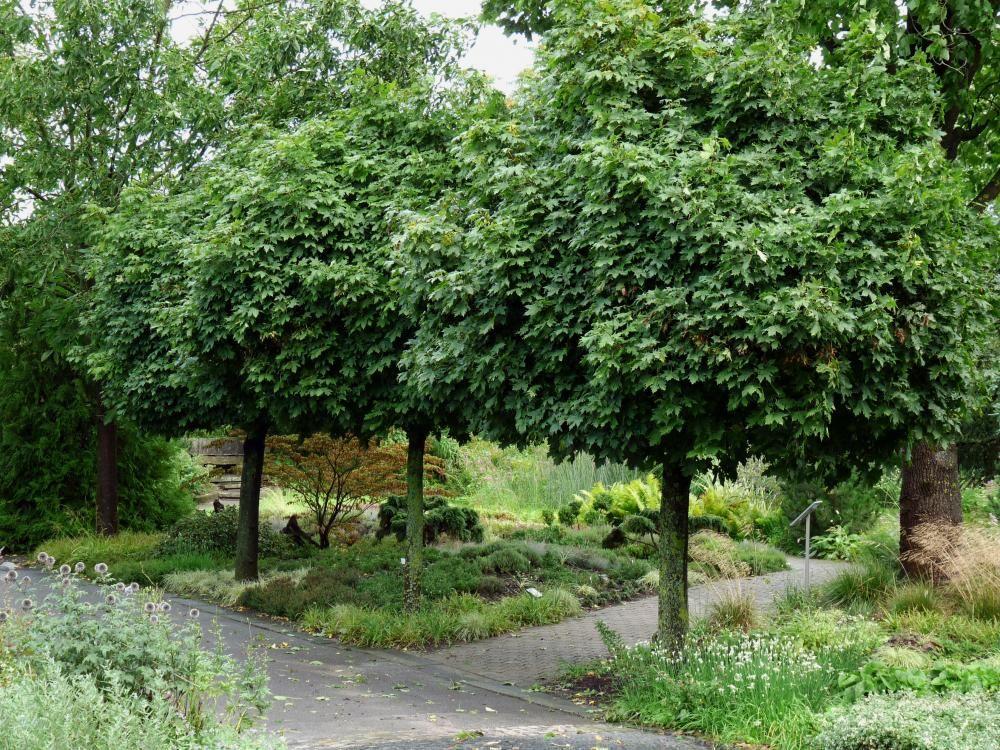 Haus Bäume, Bäume Garten Und Garten