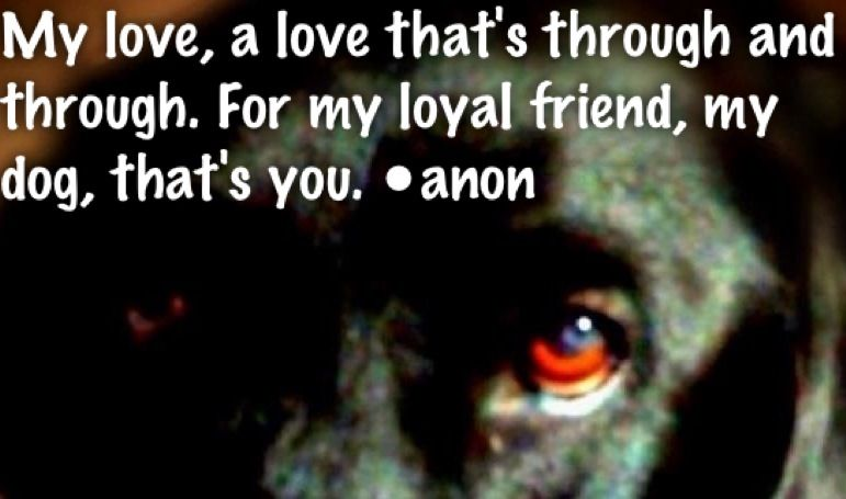 For Jackson, My love, a love that's through and through. For my loyal friend, my dog, that's you. •anon I love you & miss you so much.