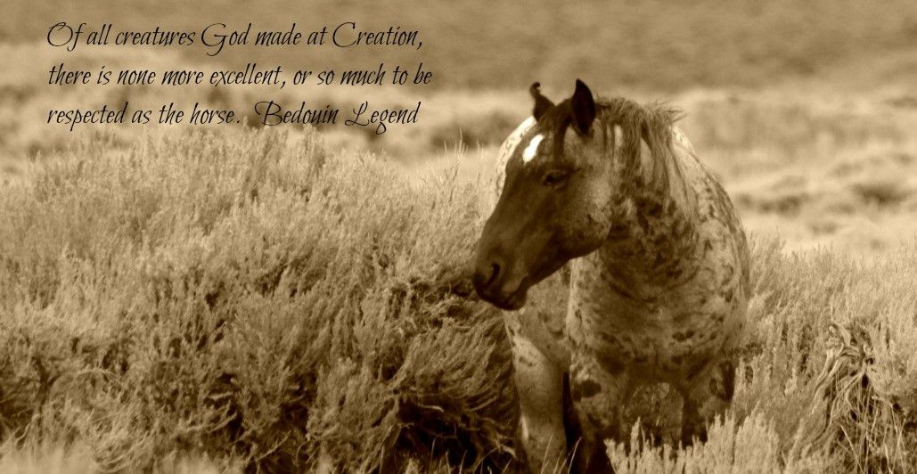 Wild Horse Images | Wild horses quotes, Wild horses, Horses