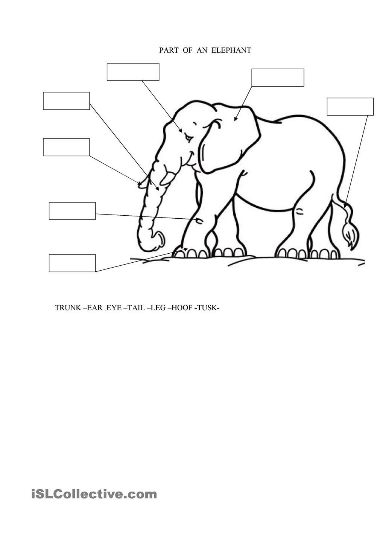 medium resolution of Pin on Elephants
