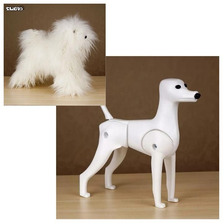 Toy Poodle Model Dog & Wigs for Practicing Grooming