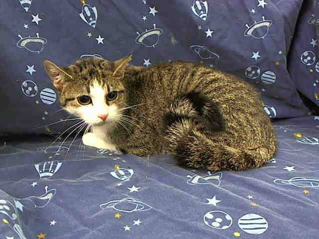 Pin On Adopt A Cat Urgent Forever Homes Needed